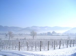 Vinfält i vinterskrud
